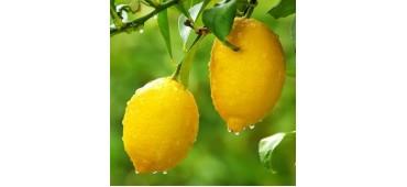 Lemons (500g) Italy