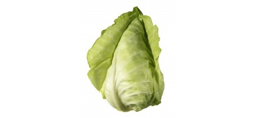 Cabbage, Green Pointed (1pc) Ireland