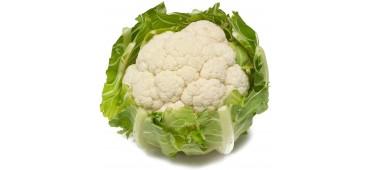 Cauliflower (1pc) Holland