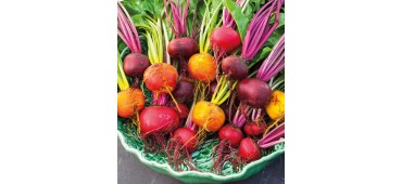 Beetroot Red/Gold Mix (600g) Ireland